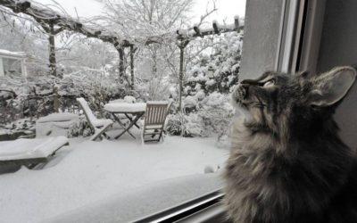 Стоит ли менять металлопластиковые окна зимой?
