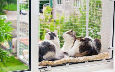 Пластиковые окна и безопасность домашних животных